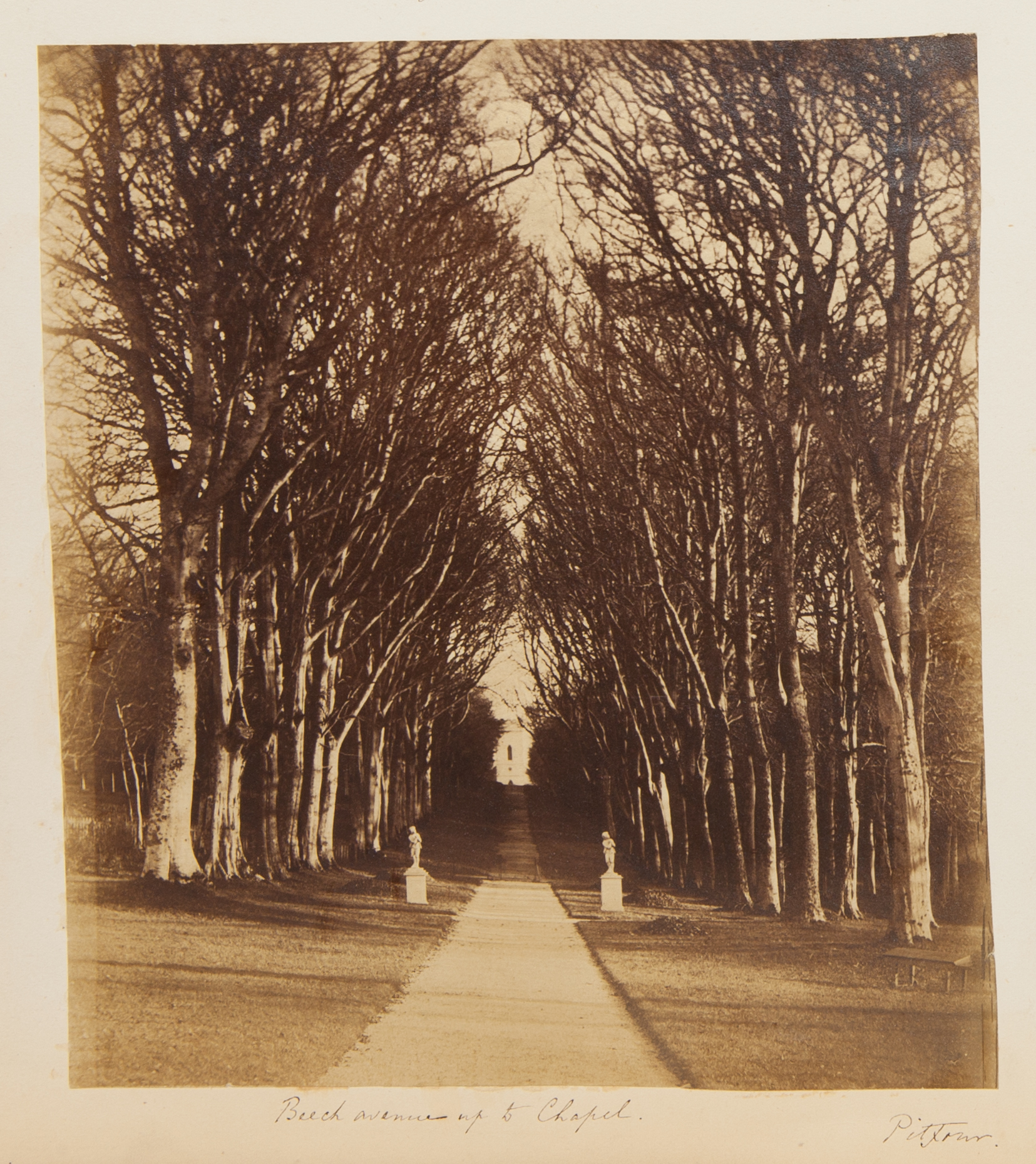 Birch avenue leading up to the chapel, from the Georgina Ferguson Album