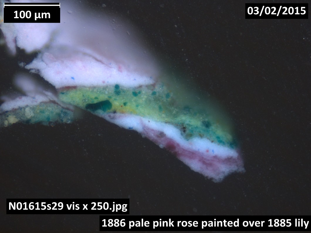 Cross-section of pale pink rose painted over lily, visible light