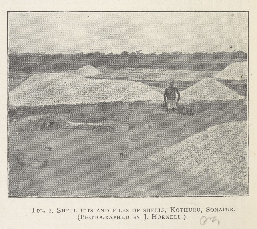 Shell Pits and Piles of Shells, Kothuru, Sonapur